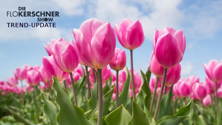 Mit diesen Tricks halten eure Tulpen länger!